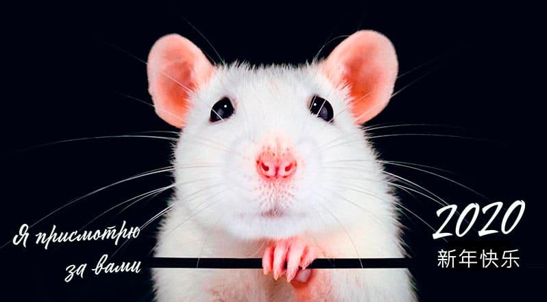 Год Крысы 2020. Китайский гороскоп. Как привлечь удачу