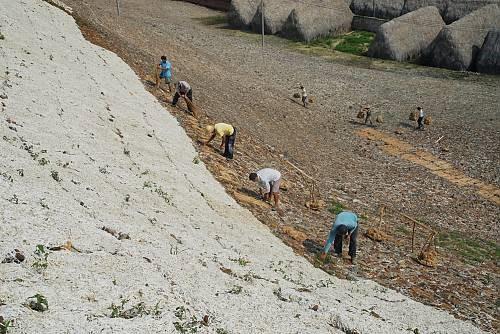 Ингредиенты выкладывают на южном склоне холма