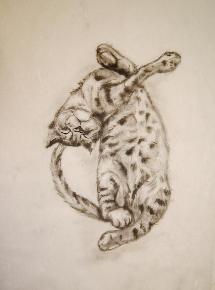 курс МК Рисуем любимых животных