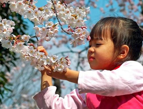 Весна, цветы, Япония